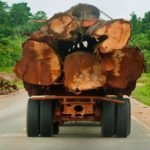 Ghana Likely To Import Timber From Liberia