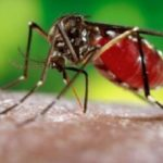 New Drug For Recurring Malaria