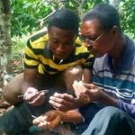 Manso District Takes Cocoa Farmers Through Artificial Pollination