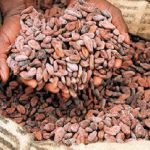 Domestic Cocoa Processing Hits 300,000 Tonnes