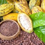 Cocoa Is A Super Food, Let's Promote Its Consumption – COCOBOD CEO